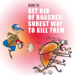 How To Get Rid Of Roaches: Surest Way To Kill Them!