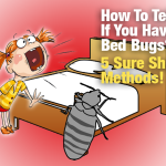 How To Tell If You Have Bed Bugs: 5 Sure Shot Methods!