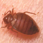 Let's Take A Look At The Best Way To Get Rid Of Bed Bugs