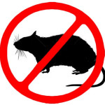 Top Picks For Natural Rodent Repellent To Get Rid Of Rodents Safely and Effectively